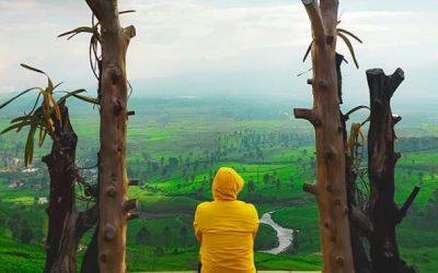 Wayang Windu, Kebun Teh dengan Sejuta Pesona di Pangalengan